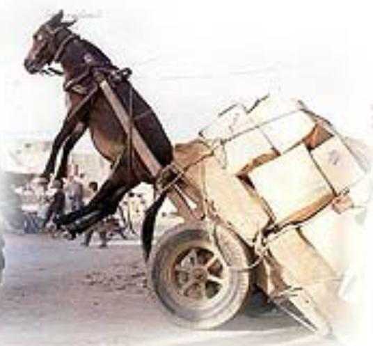 Pack Mule Overloaded