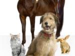 dogs cats birds horses